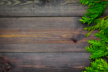 Photo for Juniper frame. Juniper branches on dark wooden background top view. - Royalty Free Image
