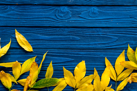 Autumn colors concept. Mockup with yellow leaves on blue wooden background top view.