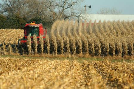 combine harvesting field of corn, rural Nebraska