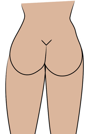 illustration of the curves of a womans buttocks