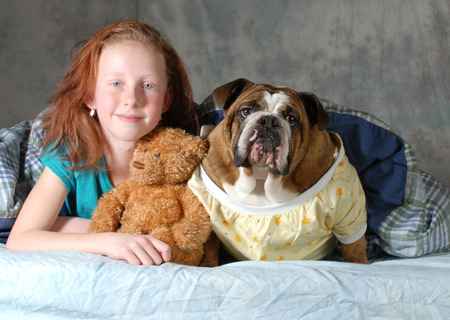 pets in bed - girl with her dog in bed - english bulldog