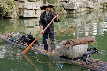 Yangshuo, Guangxi region, China, June 21, 2008 - Chinese man fishing with cormorant birds - a traditional fishing method in which fishermen use trained cormorants to fish