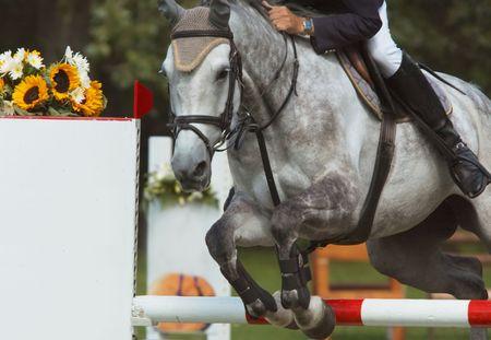 A beautiful horse jumping