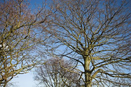 Looking up through winter trees to the sky