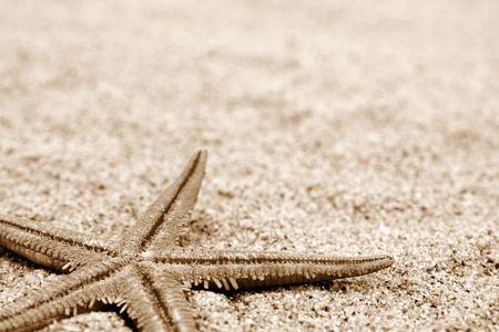 Starfish on a sand beach background. Sepia