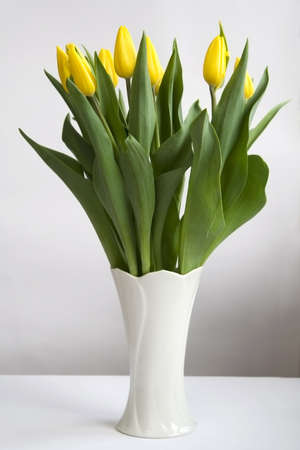 Bunch of yellow tulips in white vase