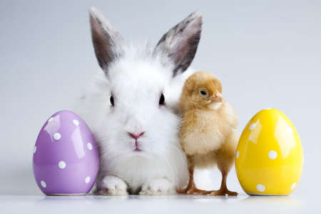 Easter bunny on chick white background