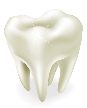 An illustration of a healthy wisdom tooth or molar