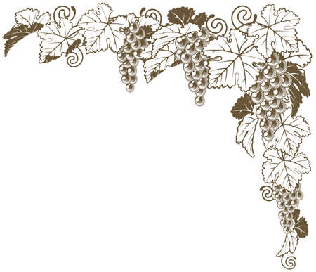 A grape vine border corner ornament design element of grape bunches and leaves in vintage style, wine label concept