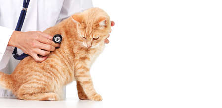 Red cat with veterinarian doctor  Veterinary clinic