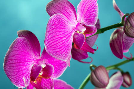 Close up of orchids in bloom