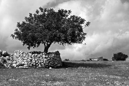 Tree in the Sicilian hinterland