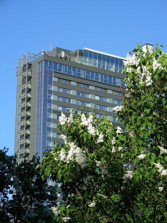 skyscraper in spring with lilac