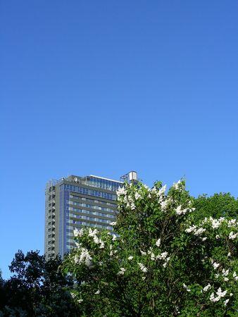 skyscraper in bloom at spring