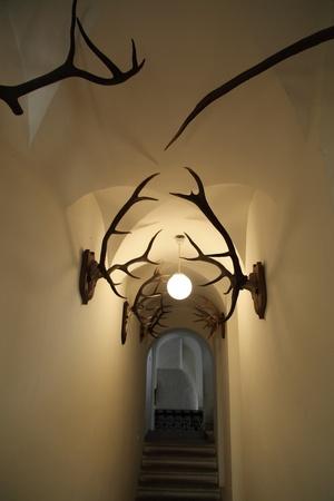 wall with deer antlers
