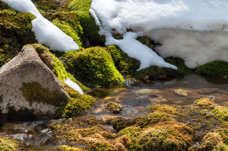`Green moss and snow on the mountain stream