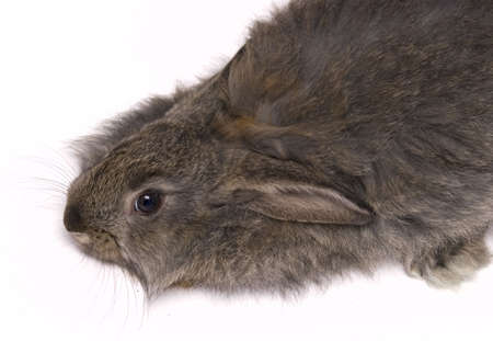 funny rabit isolated on a white background