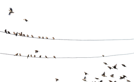 birds on wire isolated on white background