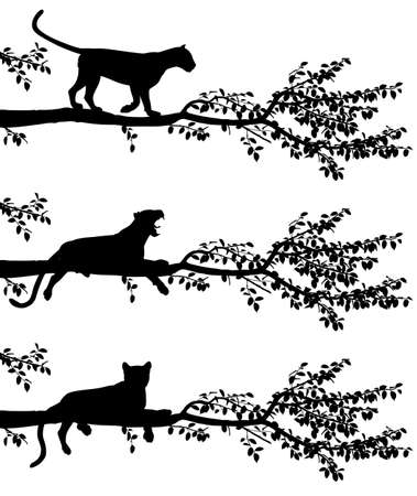 Set of three editable vector silhouettes of a leopard on a tree branch with leopards as separate objects