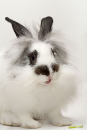 Funny spotted rabbit