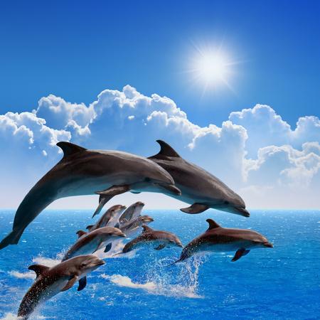Foto de Jumping dolphins, blue sea and sky, white clouds, bright sun - Imagen libre de derechos