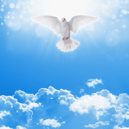 Photo for Holy spirit dove flies in blue sky, bright light shines from heaven, christian symbol, holy bible story - Royalty Free Image