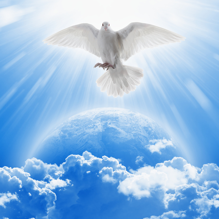 Photo for White dove symbol of love and peace flies above planet Earth. - Royalty Free Image