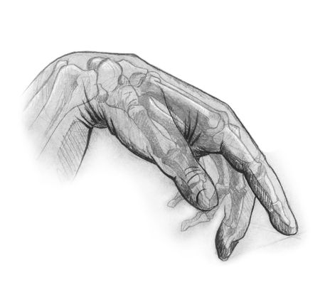 Photo pour pencil sketch of the human hand. illustrates the internal and external anatomy of the hand. great for uses in rehabilitation and occupational therapy - image libre de droit