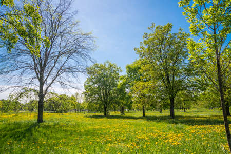Foto de Russia, Saint Petersburg: view of the beautiful summer landscape in the Park - Imagen libre de derechos