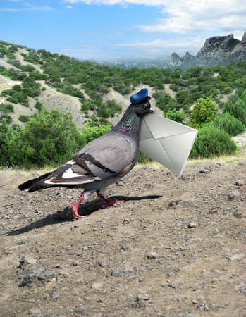 Messenger Pigeon With Letter on a mountain road