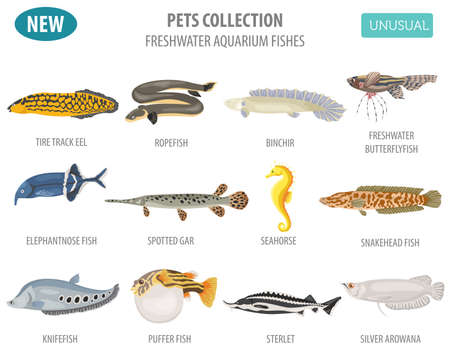 Unusual freshwater aquarium fish breeds icon set flat style isolated on white. Create own infographic about pet. Vector illustration.