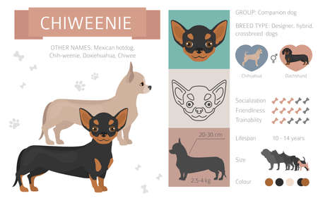 Illustration pour Designer, crossbreed, hybrid mix dogs collection isolated on white. Flat style clip art set. Vector illustration - image libre de droit