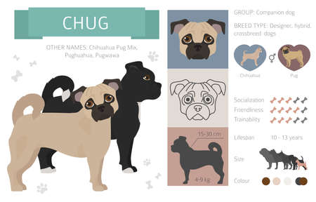 Illustration pour Designer, crossbreed, hybrid mix dogs collection isolated on white. Flat style clipart set. Vector illustration - image libre de droit