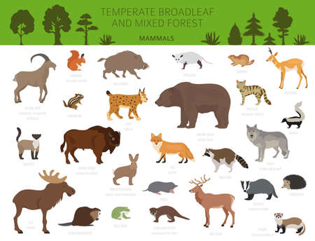 Illustration pour Temperate broadleaf forest and mixed forest biome. Terrestrial ecosystem world map. Animals, birds and plants graphic design. Vector illustration - image libre de droit