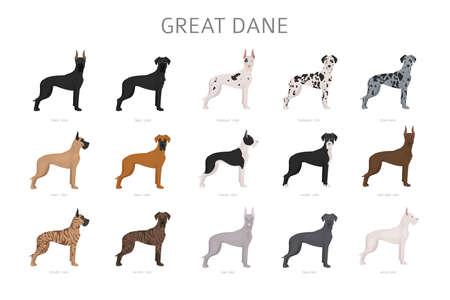 Illustration for Great dane. Different variaties of coat color dog set.  Vector illustration - Royalty Free Image