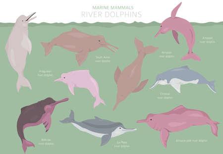 Illustration pour River dolphins set. Marine mammals collection. Cartoon flat style design. Vector illustration - image libre de droit