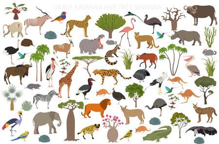 Illustration pour Tree savanna and grass savanna biome, natural region infographic. Woodland and grassland savannah, prarie, pampa. Animals, birds and vegetations ecosystem design set. Vector illustration - image libre de droit