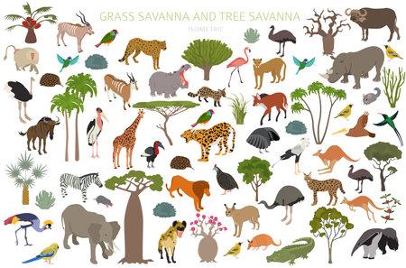 Illustration pour Tree savanna and grass savanna biome, natural region isometric 3d infographic. Woodland and grassland savannah, prarie, pampa. Animals, birds and vegetations ecosystem design set. Vector illustration - image libre de droit