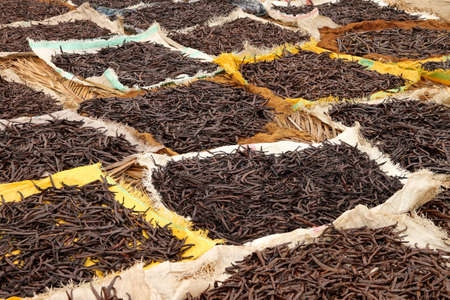 Vanilla pods collected and left to dry on the sun