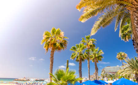 Palmtrees on the beach in the PuertoRico Gran Canaria Canary Islands Spain