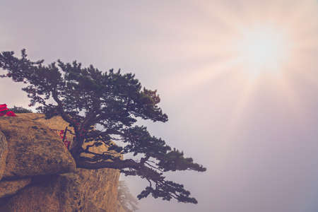 Photo pour The lonely pine tree growing on the precipice of the inspiring, sacred and majestic Huashan mountain, famous tourist attractions, Shaanxi province, China - image libre de droit