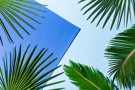 Photo pour Creative background with tropical palm leaves with bold shadow on classic blue. Minimal nature, floral, vacation summer holiday concept. Copy space, flat lay, top view  - image libre de droit