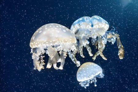 Foto de Flock of jellyfish among deep sea waters and bubbles, microcosm - Imagen libre de derechos