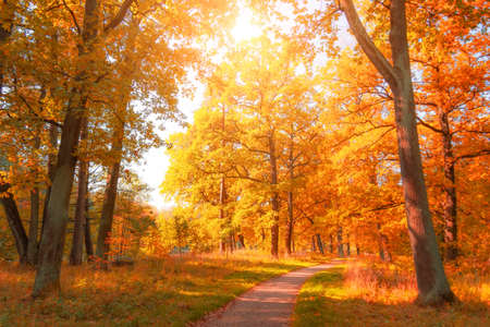 Photo for Autumn november park with yellow oaks and maples around the hiking trail - Royalty Free Image