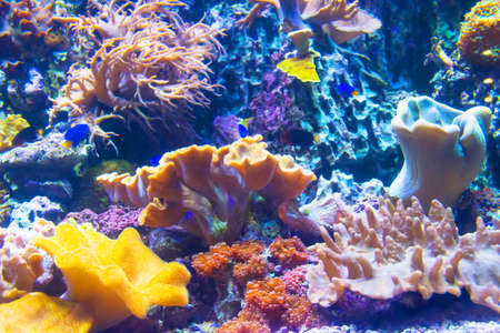 Photo pour View of the coral fauna at the bottom of the tropical sea - image libre de droit