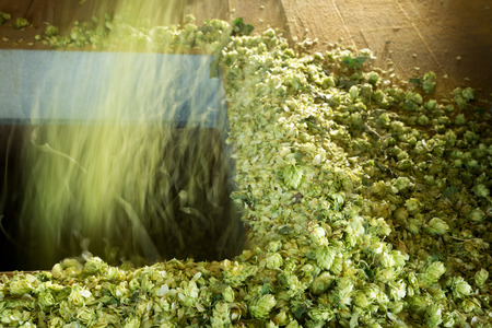 Hops in Drying Room