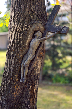 Old metal cross growing into tree trunk.