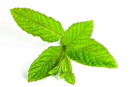 leaf of mint isolated