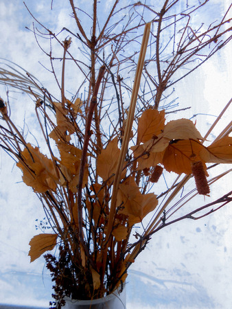 a bouquet of branches maple leaves on a winter windowpane with picture of a frost on the