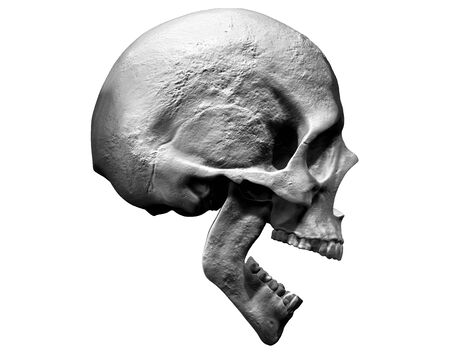 Photo pour Skull isolated in side view 3d illustration - image libre de droit